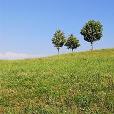 Foto Landschaft mit Bäumen